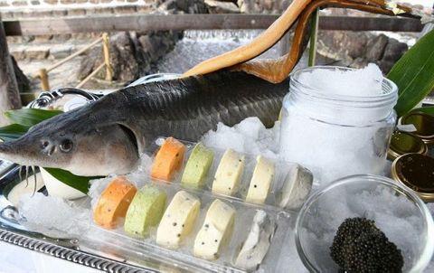 「キャビアバター」いかが 新見・チョウザメ養殖業者が開発