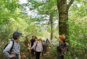 新緑の中、ハイキングを楽しむ参加者