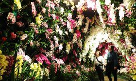 甘い香りに包まれた「蘭のトンネル」を楽しむ観光客=ハウステンボス