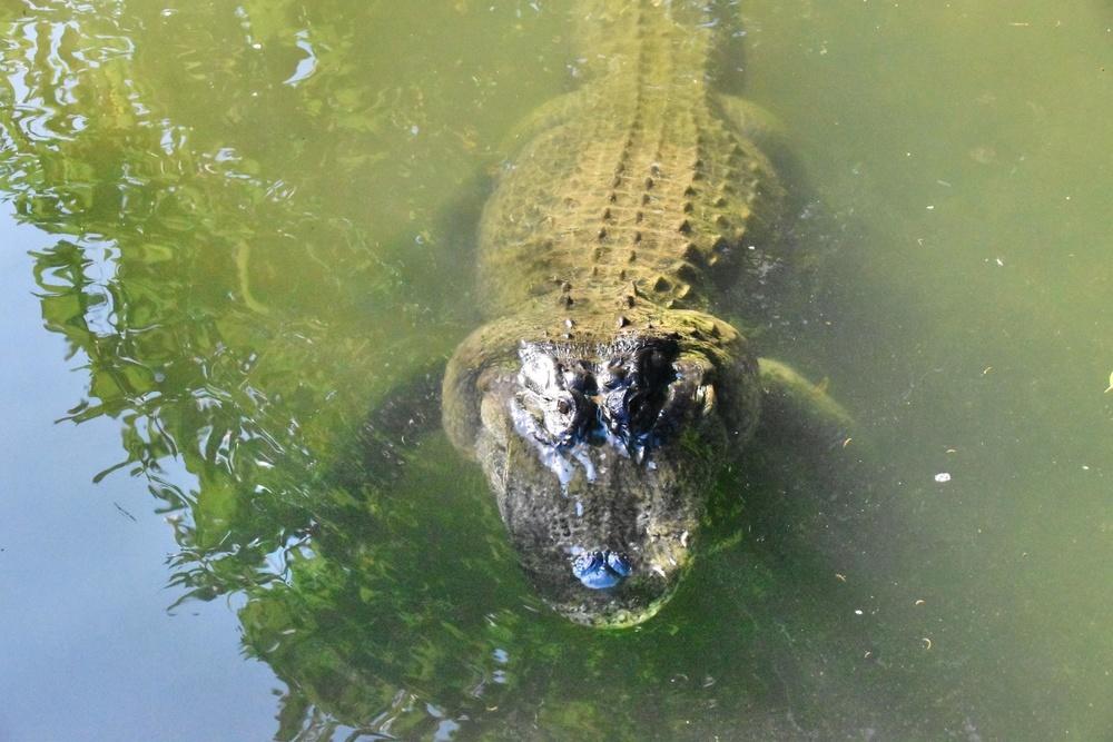 ゆっくり泳ぎながら水面に顔を出した