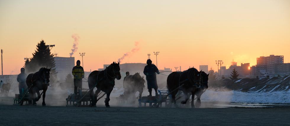 午前5時 マイナス17℃の中で500頭の朝調教が行なわれる