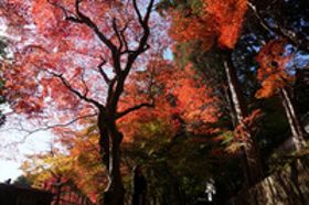 静寂な空間で錦秋のひとときを 京都・丹波地域の紅葉名所