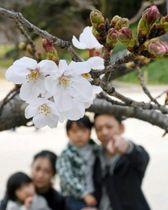 春風に揺れる舞鶴公園のソメイヨシノ=18日午後、福岡市中央区