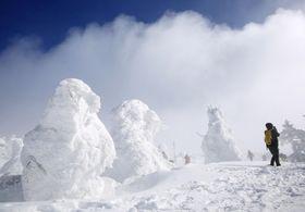 蔵王温泉スキー場の樹氷=2019年2月、山形市