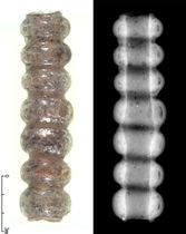 廿山南古墳で出土した7連の重層ガラス玉。右はエックス線写真(大阪府富田林市教委提供)