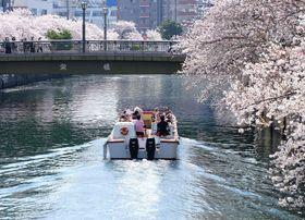 桜並木の大岡川を遊覧する「かなもえ」