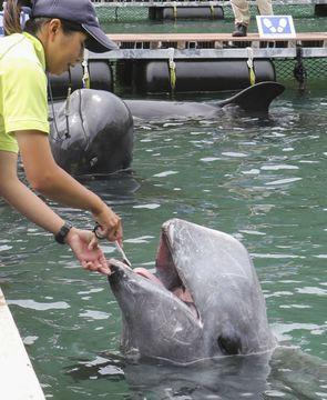 クジラも歯磨きで健康に