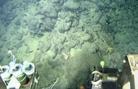 福島県沖の深海底で見つかったマンガン層(海洋研究開発機構提供)
