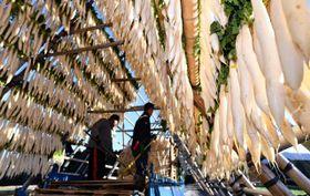 冷たい風の中、宮崎市田野町では組み上がったやぐらに大根を干す作業が本格化している=11日午後