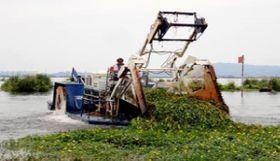 滋賀県の湖で重機を用いて行われた水草オオバナミズキンバイの駆除作業(同県提供)