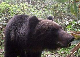 野幌森林公園で撮影されたクマ