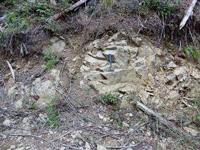 約25億年前に形成されたとされる津和野町の岩体。林道脇に岩肌が露出している(広島大提供)