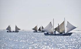白い帆を張りホッカイエビ漁をする打瀬船=18日午前、北海道・野付湾