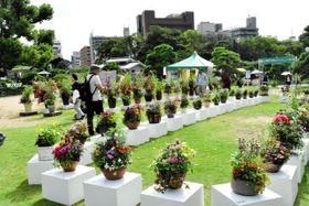 寄せ植えなど多彩な作品が並ぶ会場=明石公園