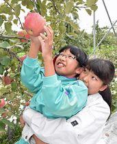 名久井農業高校の生徒に抱きかかえられ、リンゴを収穫する剣吉小児童