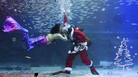 水族館の水槽で披露された、サンタクロースの格好をしたダイバーによるパフォーマンス=7日、ソウル(共同)