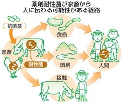耐性菌対策、畜産分野でも