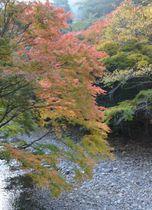 今週いっぱい鮮やかな紅葉が楽しめる見立渓谷=9日午前、日之影町