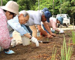 エヒメアヤメの苗を植える住民