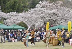 【満開の桜でにぎわう会場=津市榊原町の湯の瀬多目的広場で】
