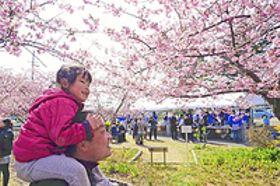 一足早く『花見』...住民要望で再開 いわきで「河津桜まつり」