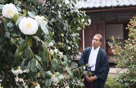 社務所の庭で一斉に咲き始めた白玉ツバキ(京都市右京区・平岡八幡宮)