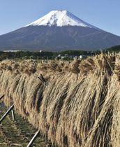 山梨県富士吉田市が「初雪化粧」を宣言した富士山=23日午前