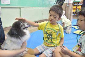 優しく頭をなでて、犬と触れ合う児童