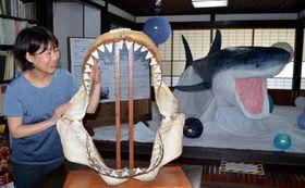 人間の頭がすっぽり入る大きさのホオジロザメの顎の標本と職員が手作りした模型(奥右)