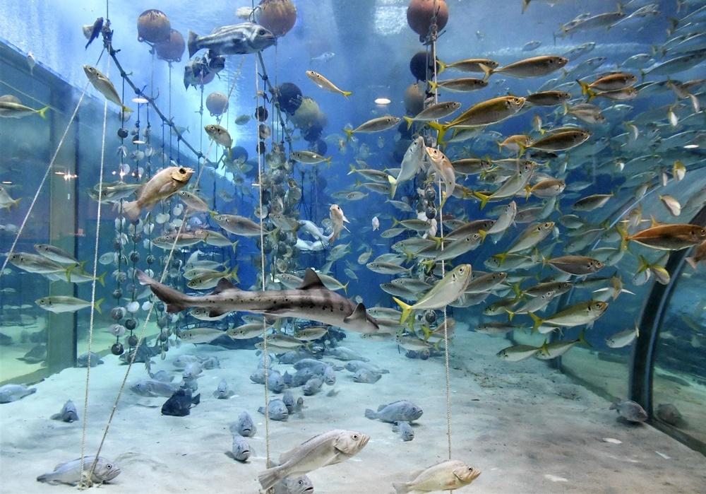 いろんな種類の魚がたくさん泳いでいる「むつ湾の海」。右側がトンネル