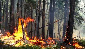 8月1日、燃えるロシア・クラスノヤルスク地方の森林(タス=共同)
