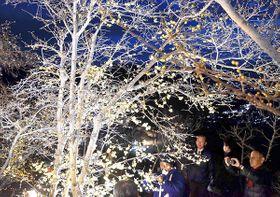 ライトアップで彩られたロウバイ=長瀞町の宝登山山頂付近のロウバイ園