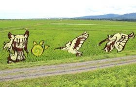 「けもフレ」のキャラクター「トキ」(左)などが浮かび上がった田んぼアート=25日、佐渡市新穂青木