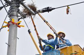 電柱からカラスの巣を撤去する作業員