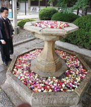参拝者の供えた仏花を水に浮かべた「花噴水」(京都市東山区・大谷本廟)