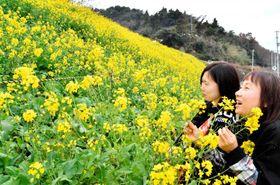 伊予灘に面する斜面を鮮やかに彩る菜の花=3日午前、伊予市双海町大久保