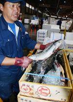 2キロ台の痩せ細った秋サケを手に、「型のいいサケが欲しいという声は多いが、小ぶりが中心」と話すカネシメ高橋水産の担当者=19日、札幌市中央卸売市場