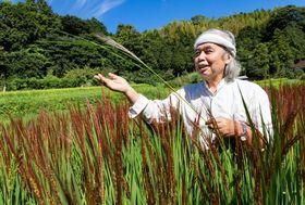 豊かに実った赤米の田んぼを見て回る宇根豊さん。コシヒカリ全盛の今、赤米は宇根さんのこだわりだ。田んぼは10月初めの刈り入れを待つ。赤米の収穫は11月上旬の予定だ=9月2日、福岡県糸島市(撮影・藤井保政)