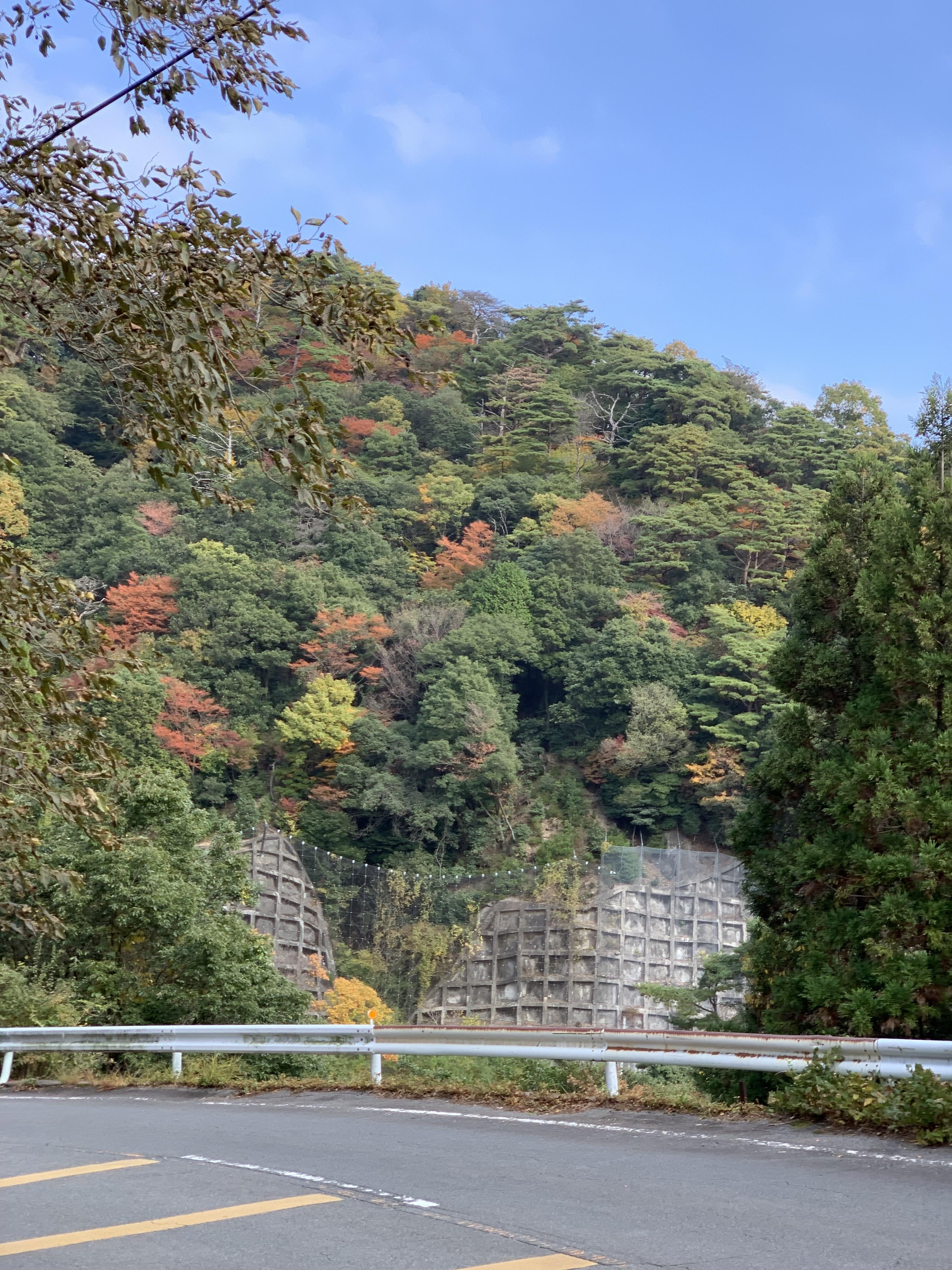 三重県御在所岳の紅葉を鈴鹿スカイラインから望む。2020年11月