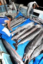 船上にずらりと並ぶバショウカジキ=日置市東市来の江口漁港