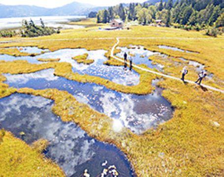 尾瀬の秋空を水面に映す池塘と、それらを縁取る黄金色の草紅葉。左後方は尾瀬沼=檜枝岐村・尾瀬国立公園の沼尻平