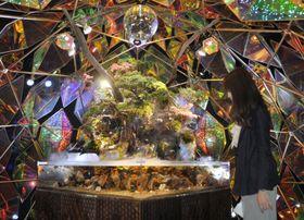 観光型の複合商業施設「ミ・ナーラ」の「金魚ミュージアム」=20日、奈良市