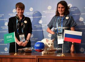 ロシア―サウジアラビアのW杯開幕戦の結果を予想する「予言猫」アキレス=13日、ロシア・サンクトペテルブルク(ロイター=共同)