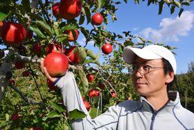 IT業界から転身し、昨春独立就農した菊池和久さん。先進地に学び、高品質なリンゴ生産に取り組む