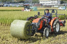 油が付着したコメを刈り取る農協職員=24日午後、佐賀県大町町