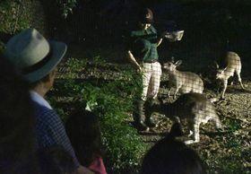カンガルーの活発な姿が見られた「のいちdeナイト」(香南市の県立のいち動物公園)