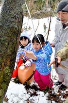 イタヤカエデにパイプを差し込み、樹液を採取する親子=尾花沢市