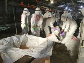 鳥インフルエンザが確認された養鶏場で行われる殺処分作業=3日、宮崎県都城市(同県提供)