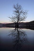 なぐ余呉湖にアカメヤナギと山並みが映り、横山岳が夕日に染まる。鏡湖が対称的な風景をつくる(2月5日、長浜市余呉町川並)