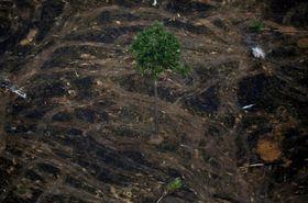 伐採されたアマゾン地域の森林=9月、ブラジル・ロンドニア州(ロイター=共同)